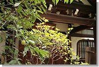 当山厳浄院は崖地の狭い境内を利用し、都会の中で失いつつある木造建築、樹木、土、石を大切にし、「質素な暖かい里寺」と位置づけ、「心」の休憩所造りに努めております。 浄土宗に属し、総本山は京都の知恩院、関東の大本山は港区芝の増上寺、鎌倉の光明寺、そして旧来の本寺は文京区小石川の傳通院です。 寛永5年(1628)文京区西片1丁目に創建。 承応3年(1654)御用地となるので傳通院領の一部をいただき、現在地に移転。約380年の歴史を経ています。